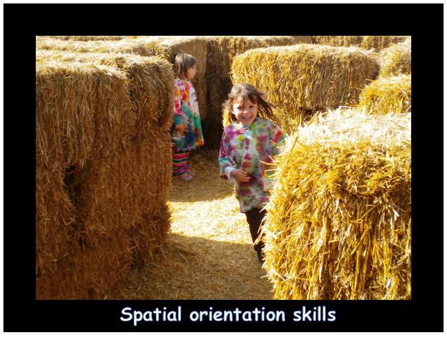 Spatial orientation skills.PNG
