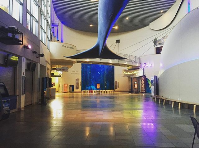 """Visiting the Aquarium of the Pacific after hours prepping for our concert this June! Check out our #FacebookEvent and our #website for more information about our concert """"Pale Blue Dot: A Concert of Hope"""". 🔵🌎 #TrueBrass #PaleBlueDot"""