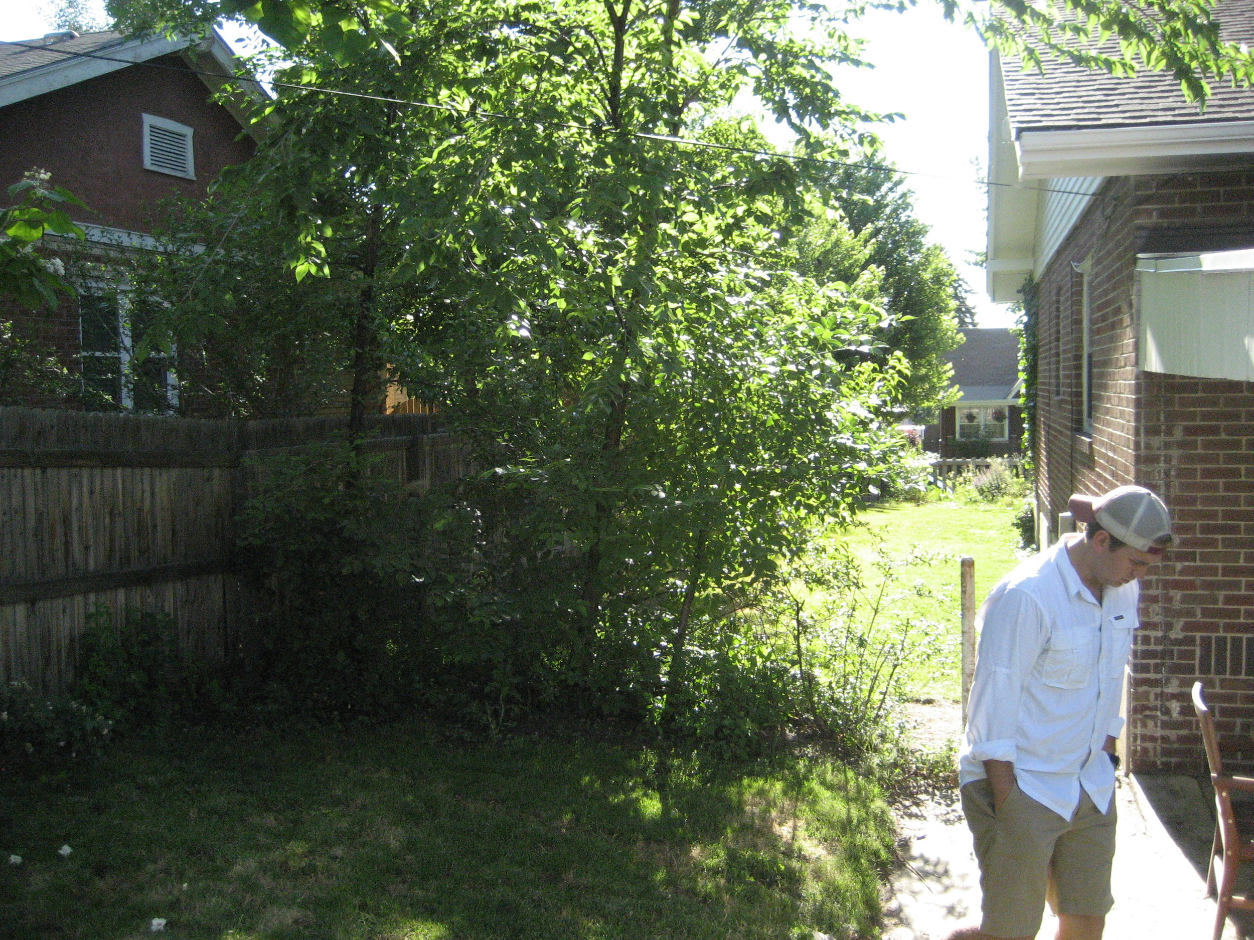 Overgrown weed trees all around the yard at our first investment property.