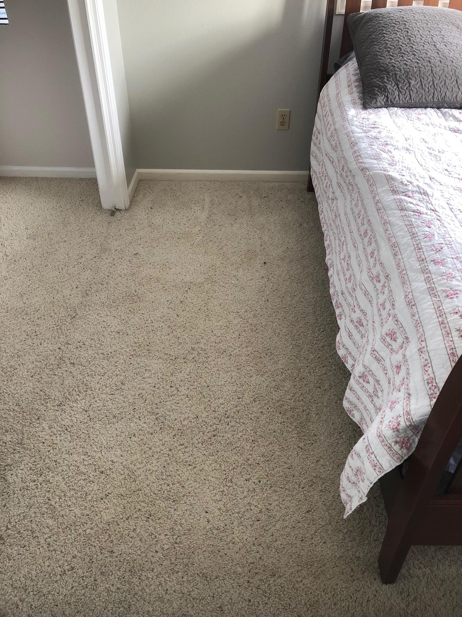 Old stinky carpet
