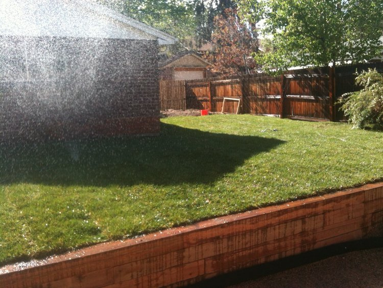 I had to add this photo of the fresh green grass before the hot summer got to it! This was right before we added the fence to hide the potty area
