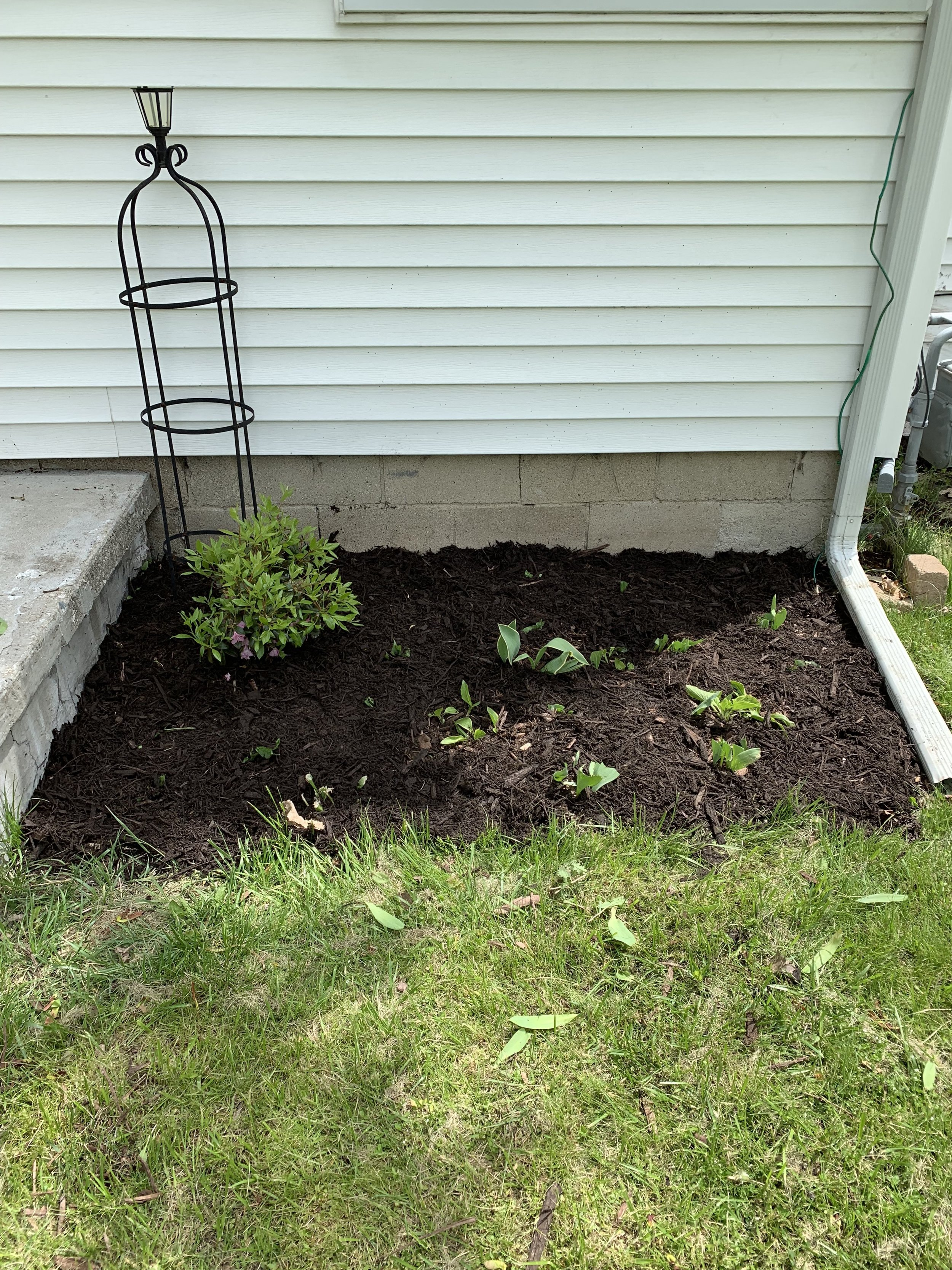 Transplanting hosta to spruce up the curb appeal at the Woody rental property