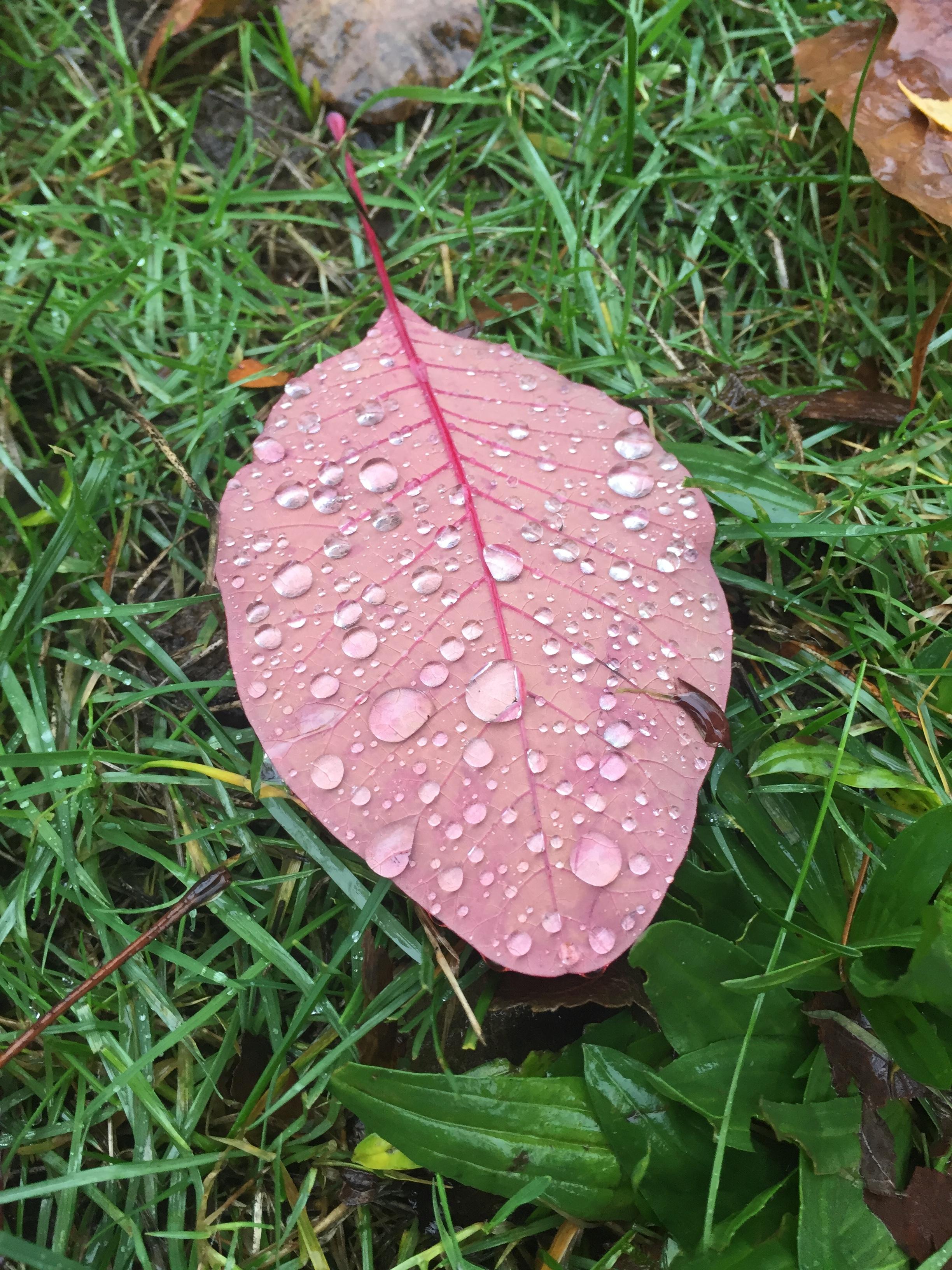 Pretty leaf2.JPG