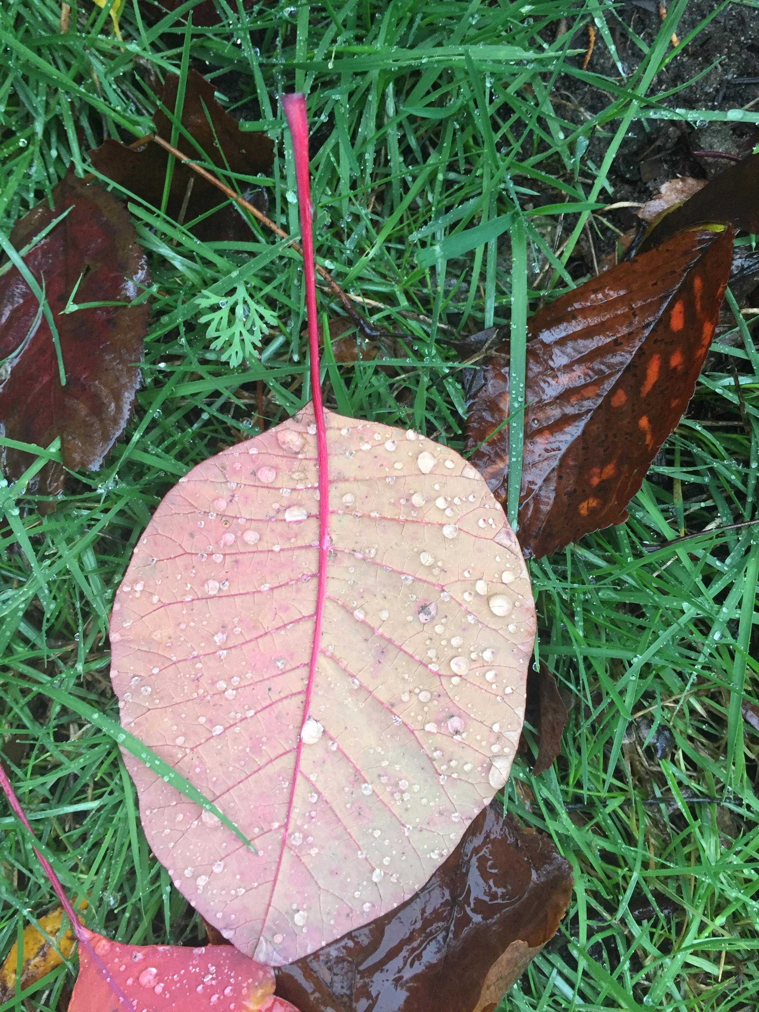 Pretty leaf3.JPG