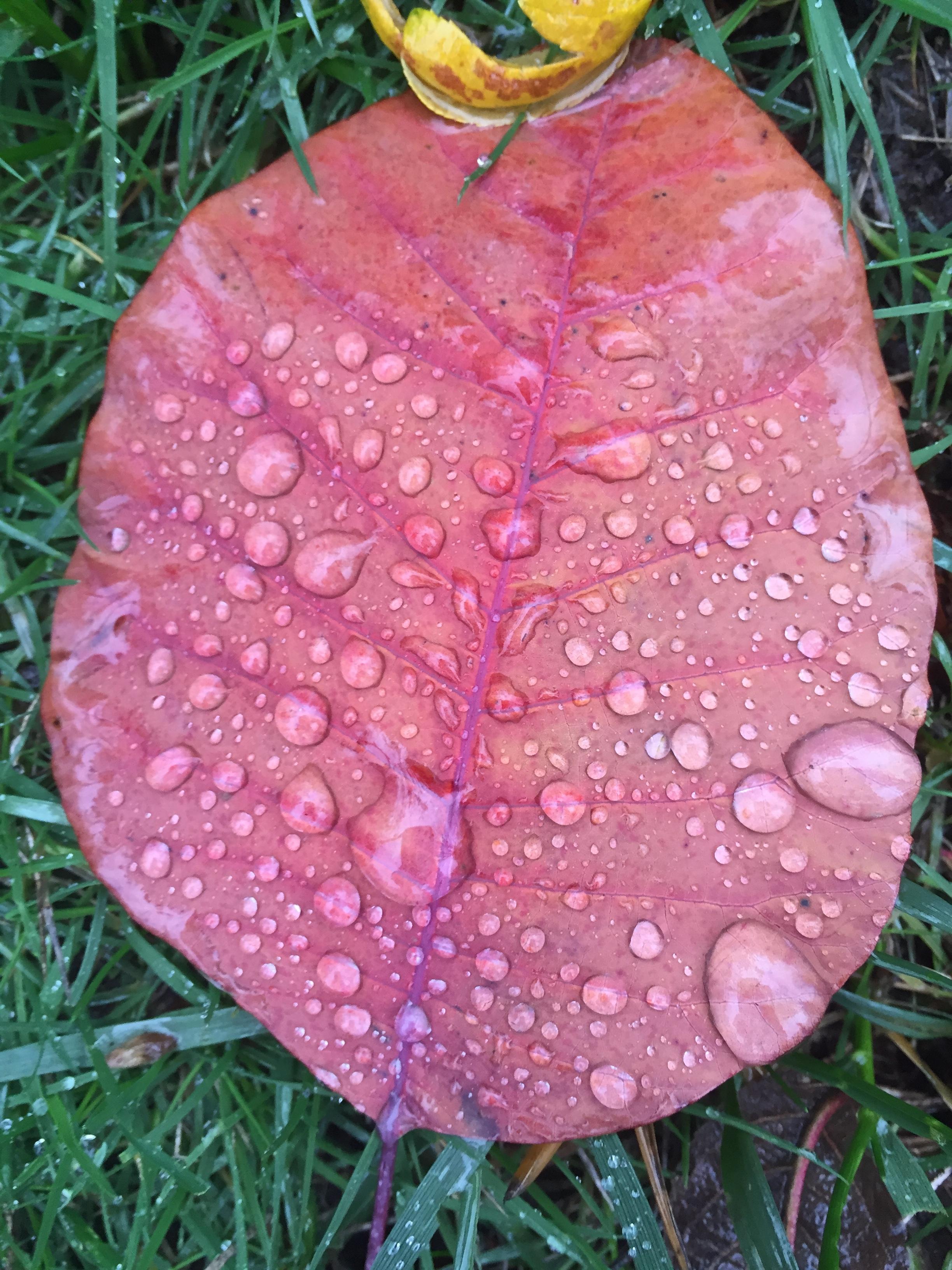 pretty leaf1.JPG