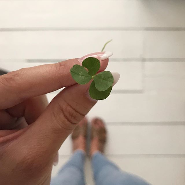 Lucky Rosey 🍀 . I found another 4 leaf clover on our walk this evening. My second in a month - the first on Billy's 3 month birthday, this one exactly a month later 💙 🙌🏼 x