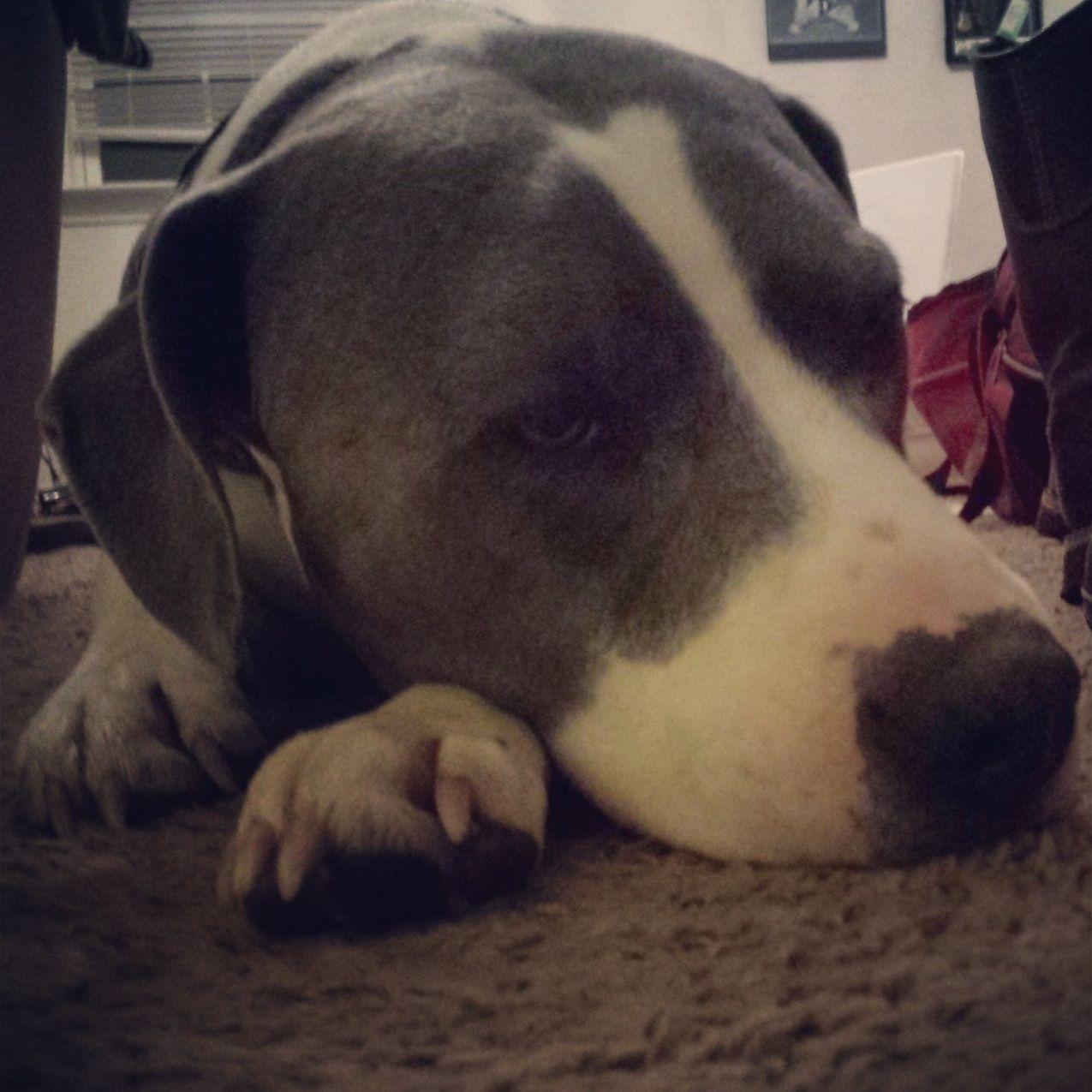 Dogs & Lyme disease