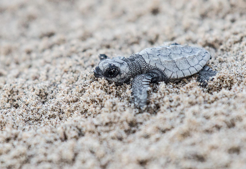 baby turtle.jpg