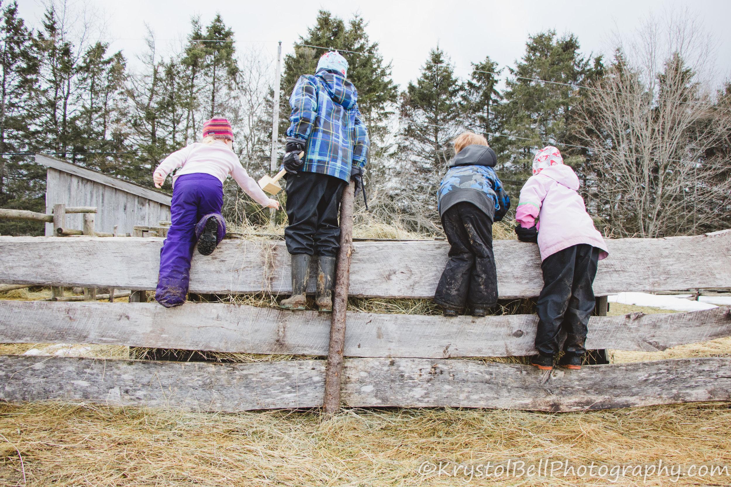 Braegha, Samuel, Teghan, and Isabelle visiting the sheep.