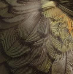 hamu collection bird feathers.jpg