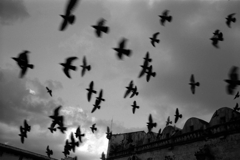 Birds fly over the Plaza de la Catedral, Old Havana, Cuba.