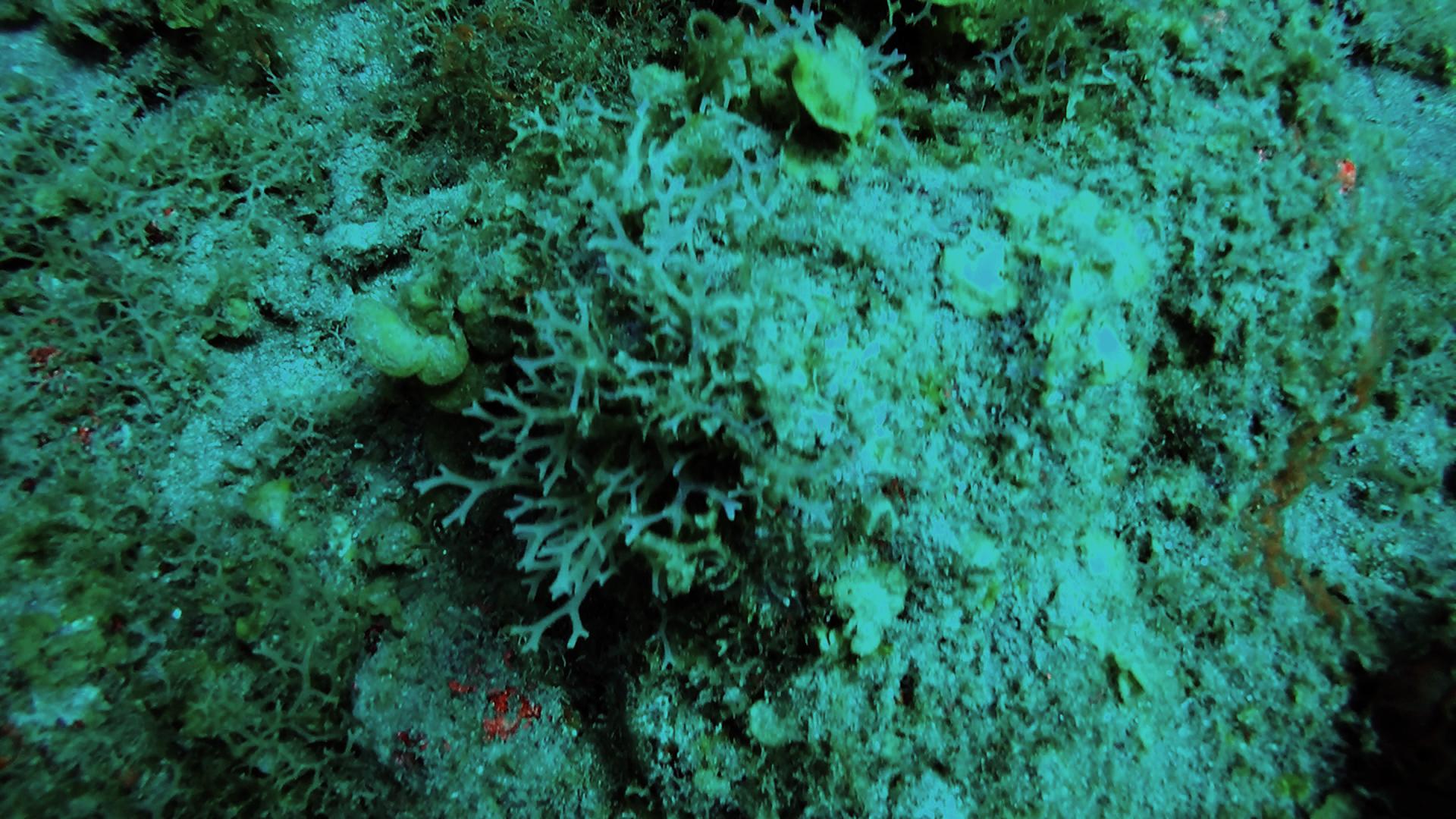 Algae growing on coral.