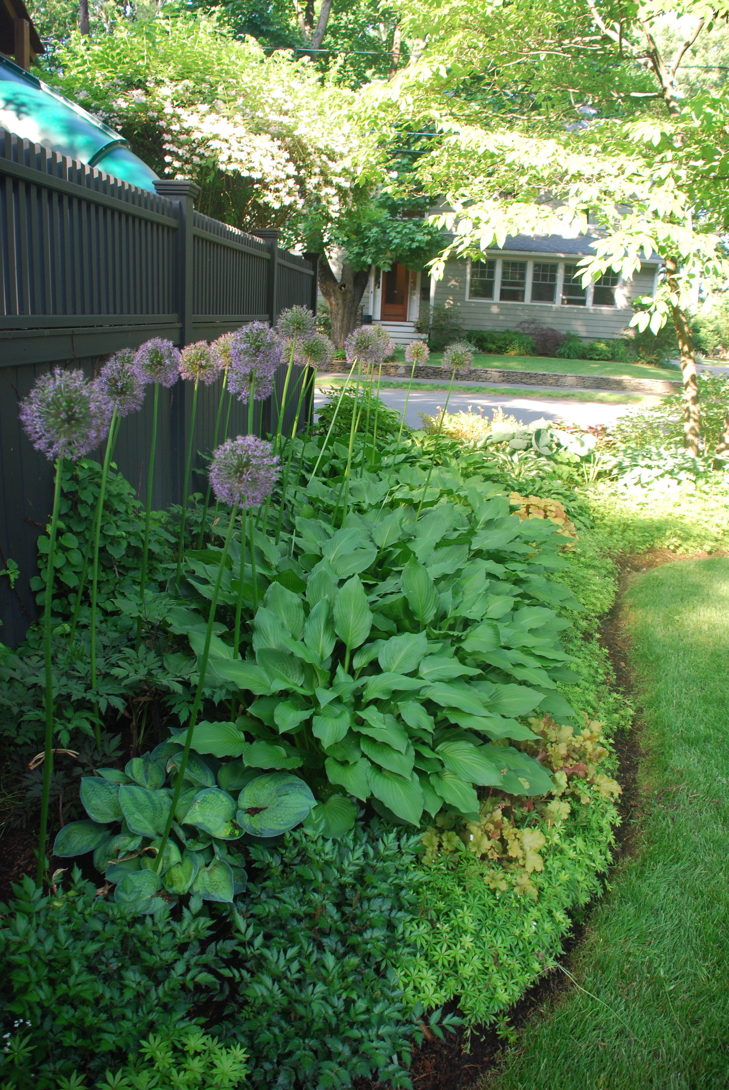 Hosta, allium and other light shade plants