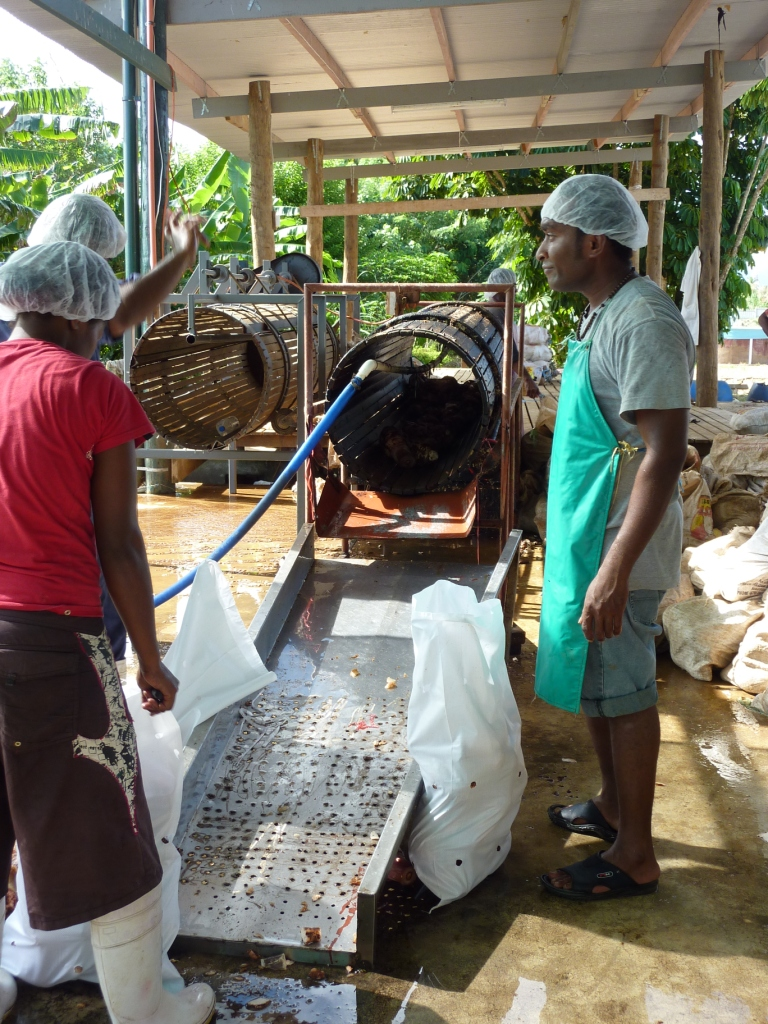 Cleaning Taro Kaiming Fiji.JPG
