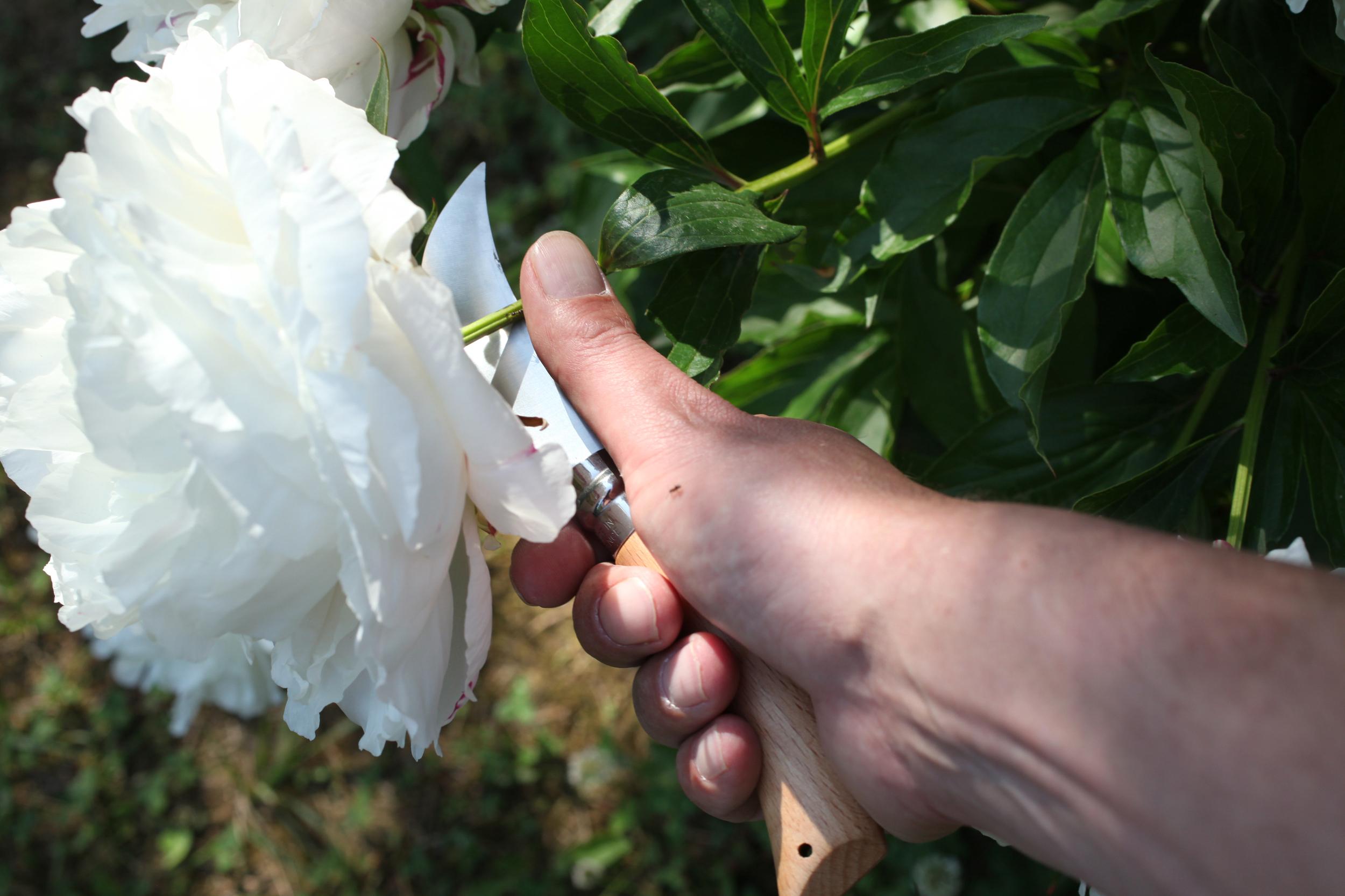Pruning knife double blade Opienel