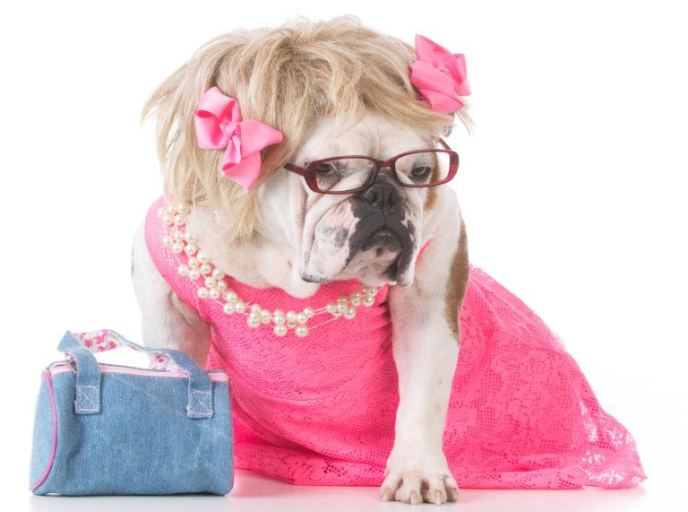dress-up-pet-day.jpg