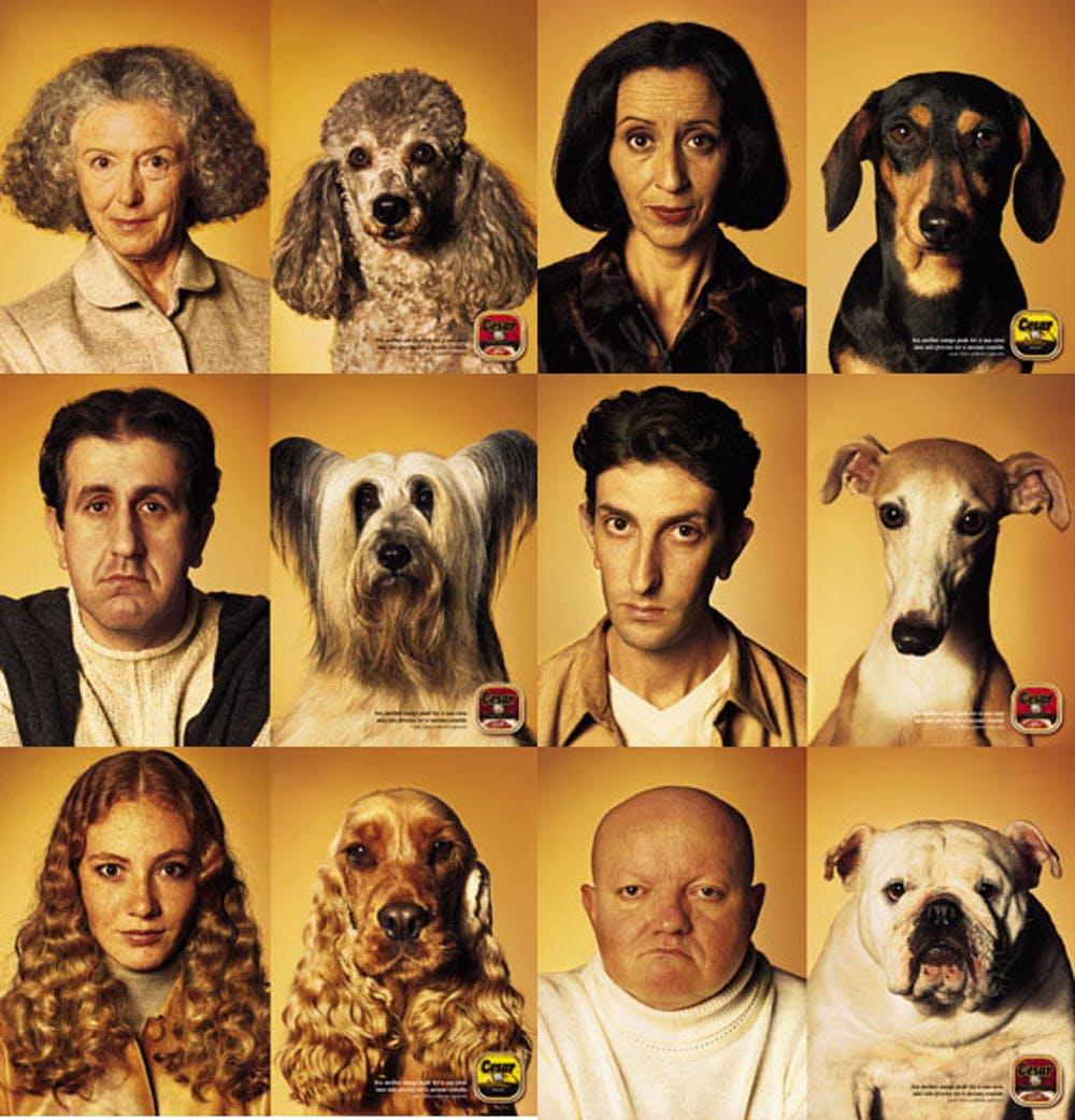 Cesar dog food.jpg