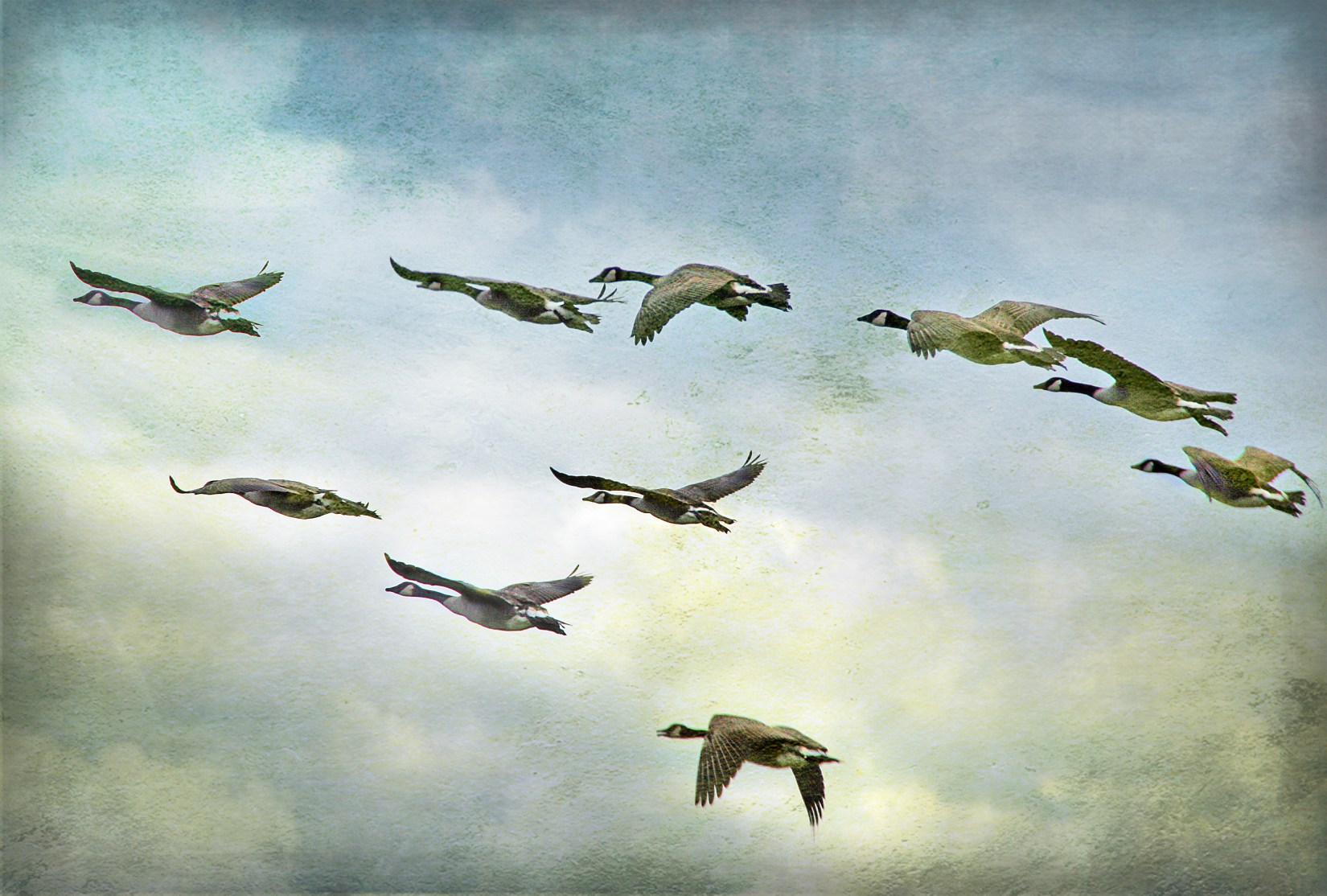 Wild Geese Mary Oliver One Breath Mindful Living inspiration