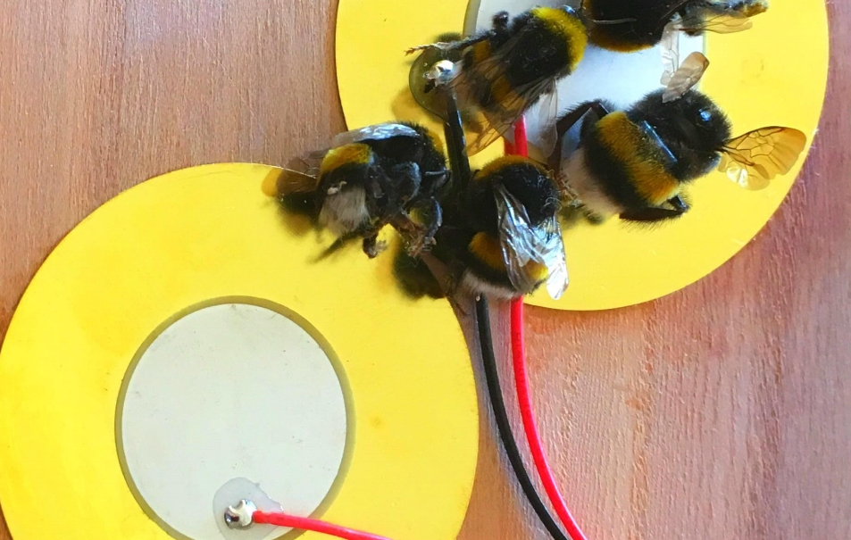 Nigel Helyer Bees.jpg