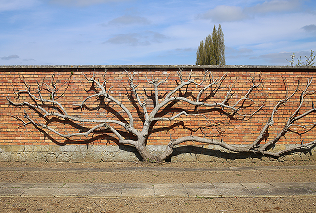 Barrington-Court-espalier-walled-garden-somerset-architecture