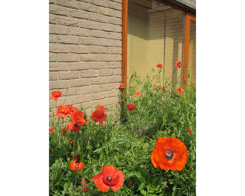 Newington Green House 2 - 1500W RGB - Prewett Bizley Architects.jpg