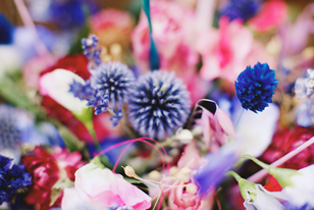 Bright colourful dried flowers