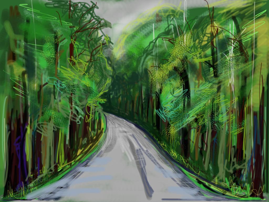 New Zealand Tree Tunnel