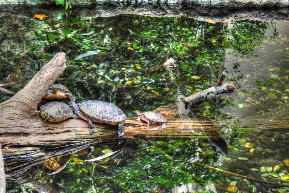 red slide turtles on log