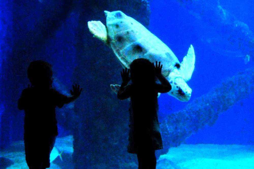 boy girl aquarium
