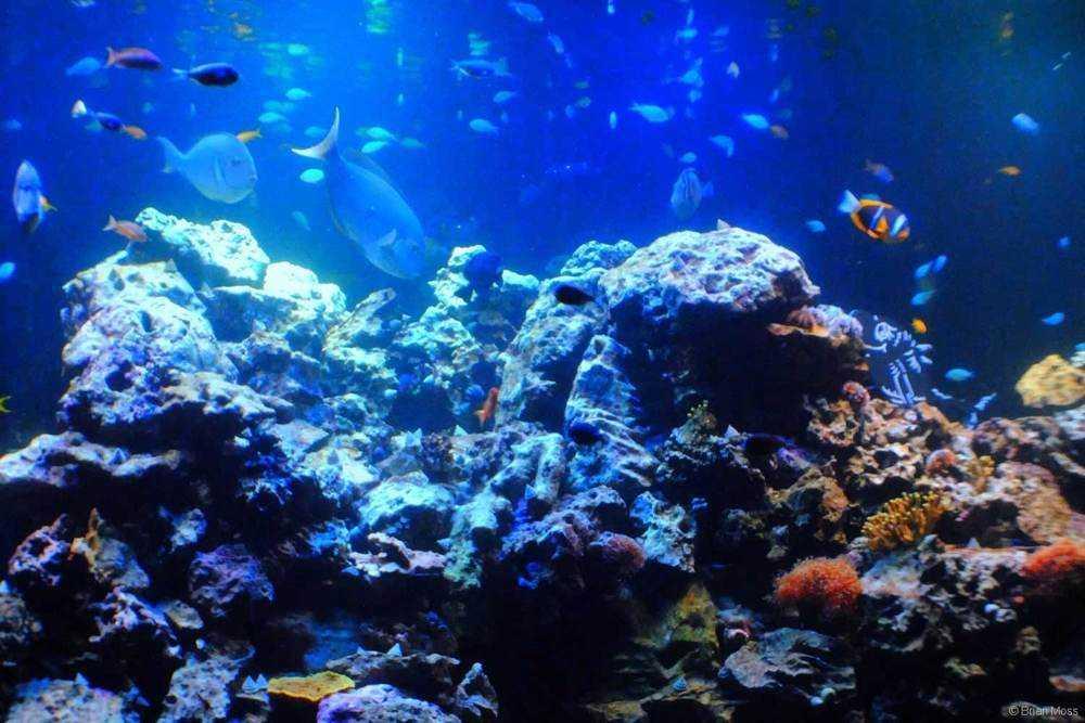 coral reef - virginia aquarium