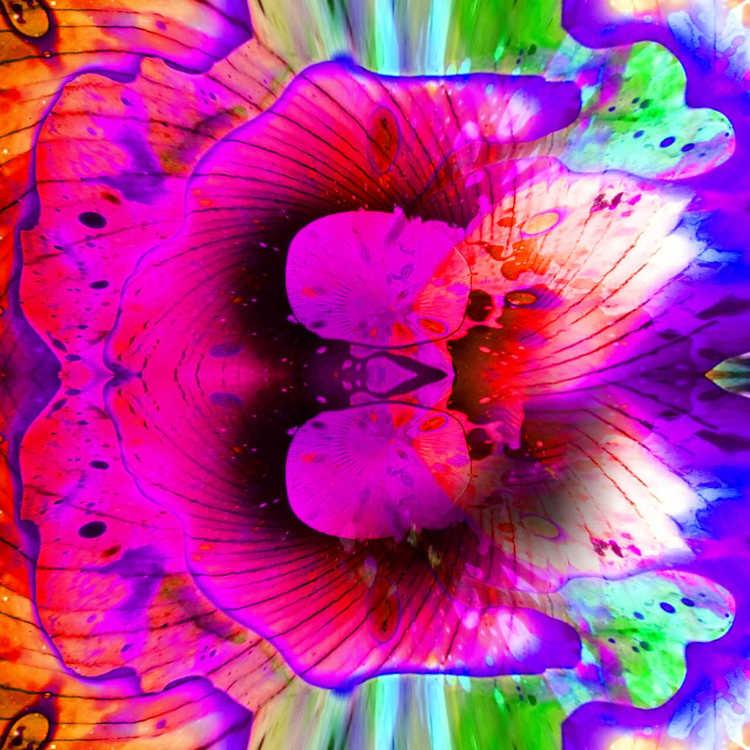 liquid-flower-flower+_compressed.jpg