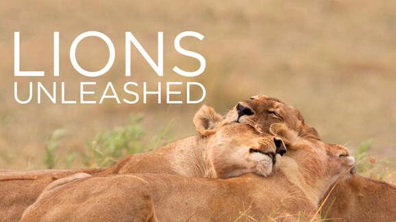 Lions Unleashed (Smithsonian/Nat Geo WILD)