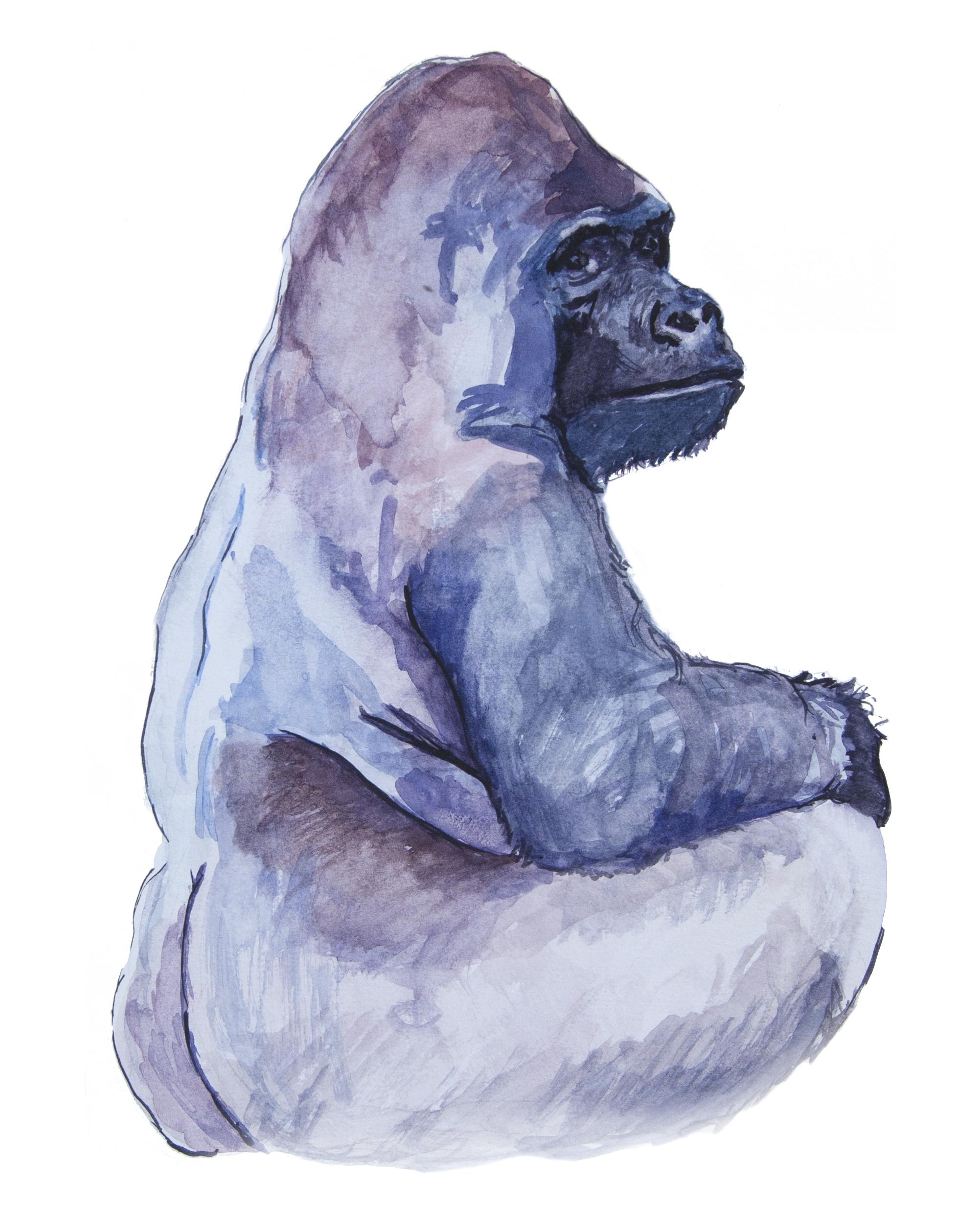 gorilla watercolor. meredith nutting 2017