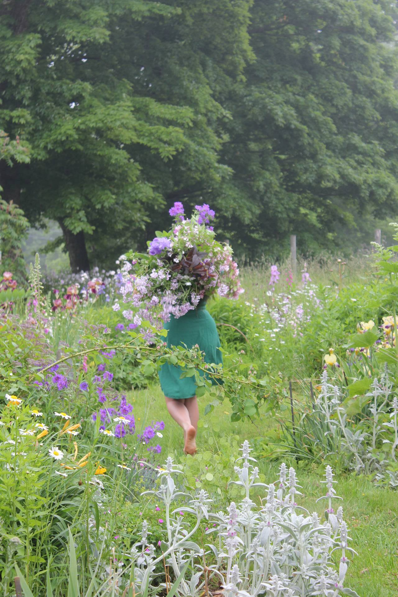 Nova Scotia flower farm and garden, Hedgerow Flower Company harvesting flowers.