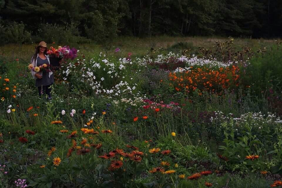 Hedgerow Flower Company's field in full bloom. Flower farm and wedding florist in Nova Scotia..jpg