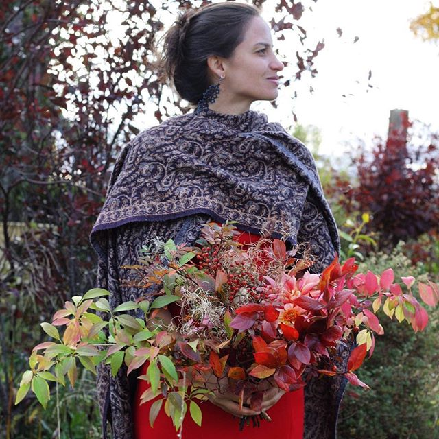✨Day 7 of autumn bouquets✨ . . ✨Richly coloured in a wide sweep🍷✨ . . . #dahliatotallytangerine #autumnbouquet #forsythiafoliage #fallweddinginspiration #gardengathered #canadiangrownflowers #blueberryfoliage #widebouquet #farmerflorist #autumnweddinginspiration #organicflowers #eastcoastbride #weddinginspiration #halifaxflorist #dahlialabyrinth #rosehips #woolshawl #novascotiawedding #seasonalfloweralliance #saltscapesmagazine #halifaxweddings #halifaxns #windgateweddings #annapolisvalley #novascotia #hedgerowflowercompany  #aseasonalshift #seasonspoetry #inspiredbynature #leafpeeping