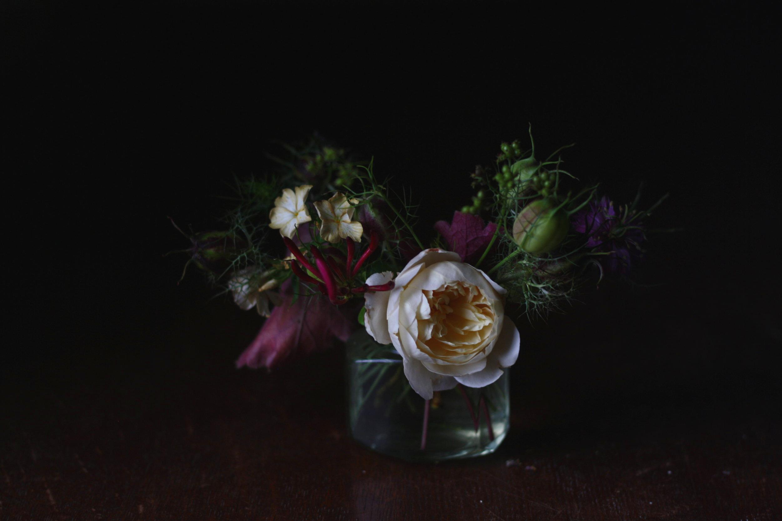 DA 'Crocus' rose, heuchera, Phlox 'Cremee Brulee' and Nigella seed pod.