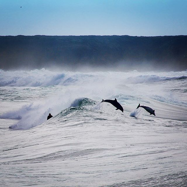 Happy #internationalsurfingday - now go have a #surf and don't forget to say hi to the locals...🏄🏻‍♂️🏄🏼‍♀️🐬 #isd2019 #california #pacificocean #surfing #canon #surfline #805SEA | 📷 @montecrofts