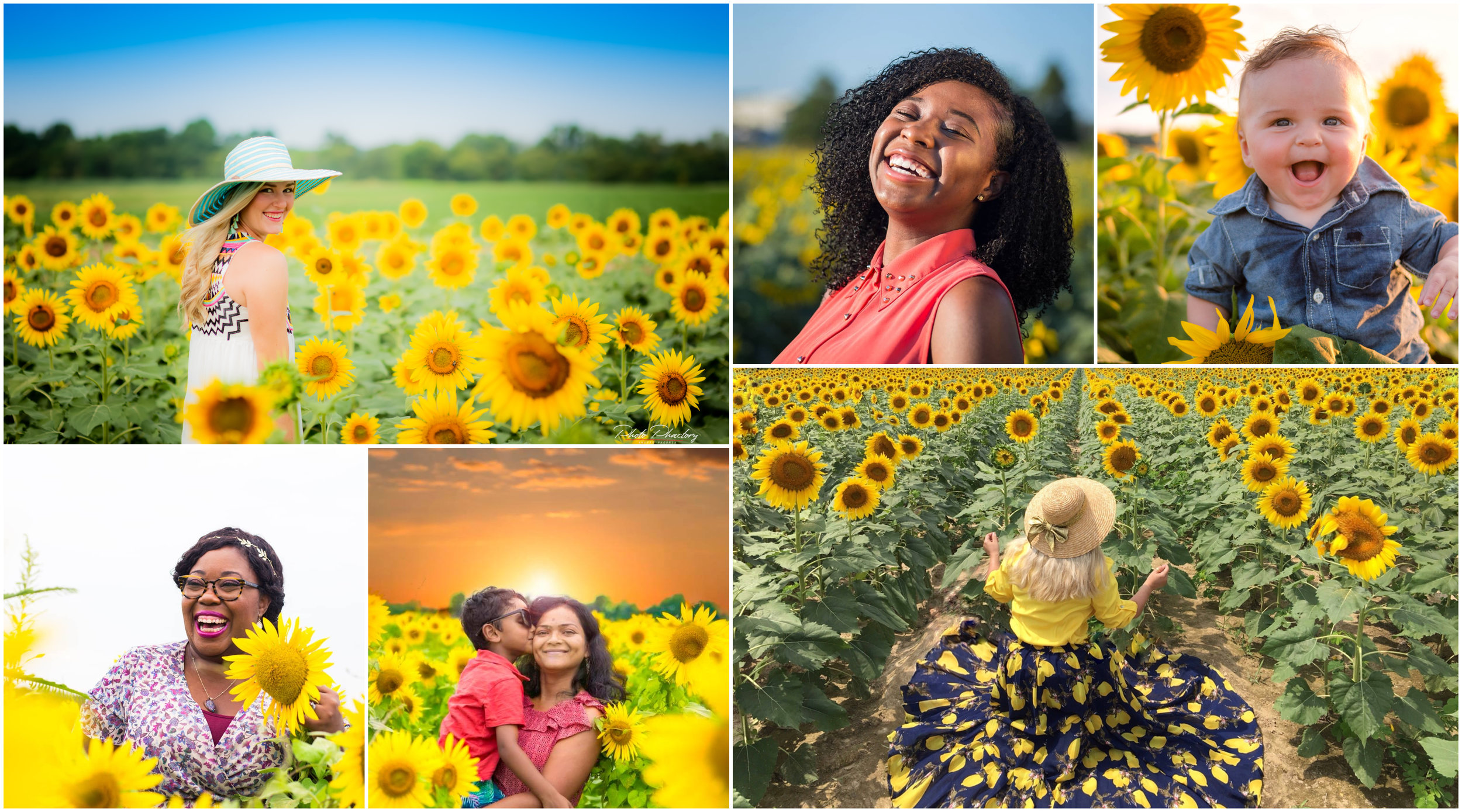 sunflowers 2018.jpg