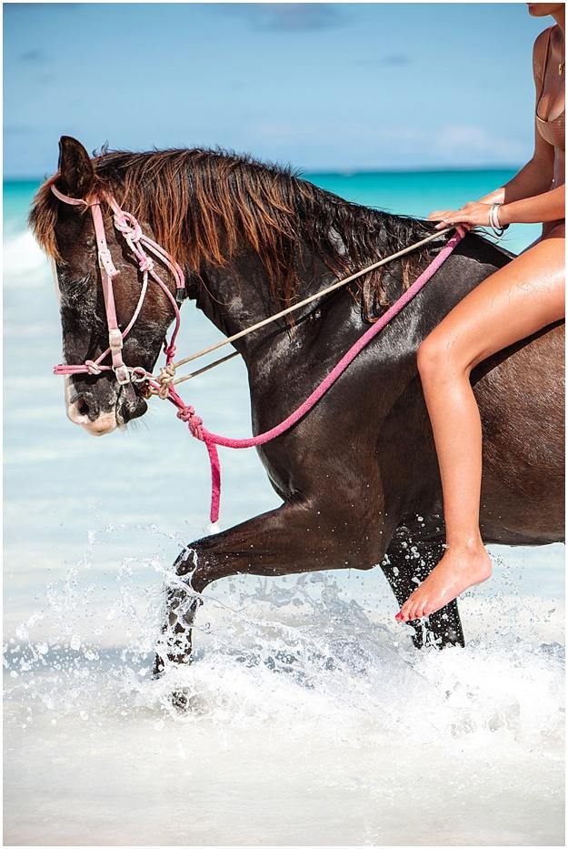Harbour Island horses beach horse riding Bahamas