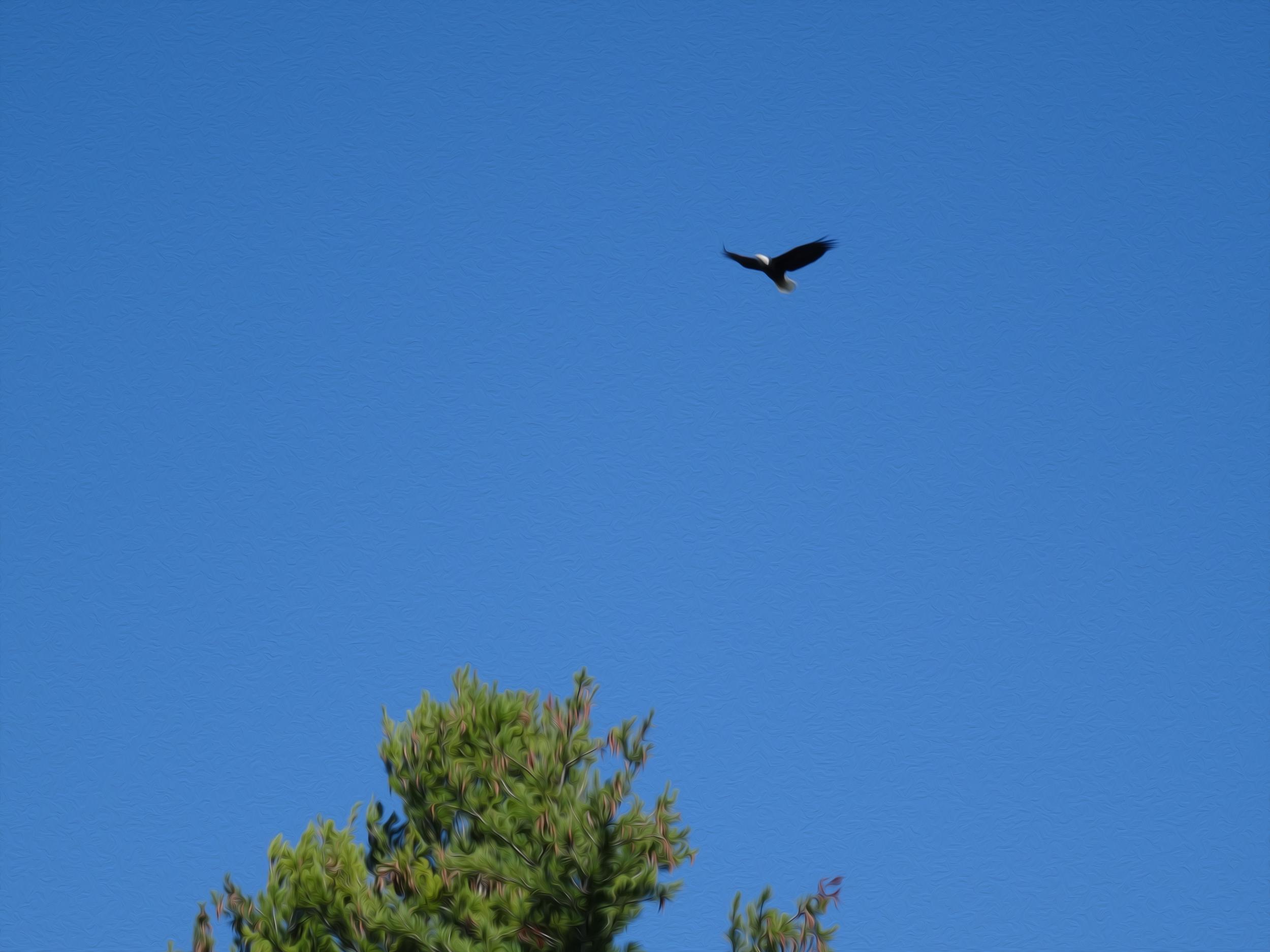 Eagle on .jpg