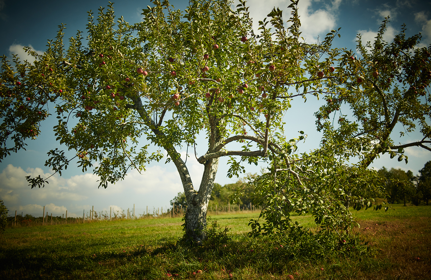 091915_Apple_Picking_OuthouseOrchards_432.jpg