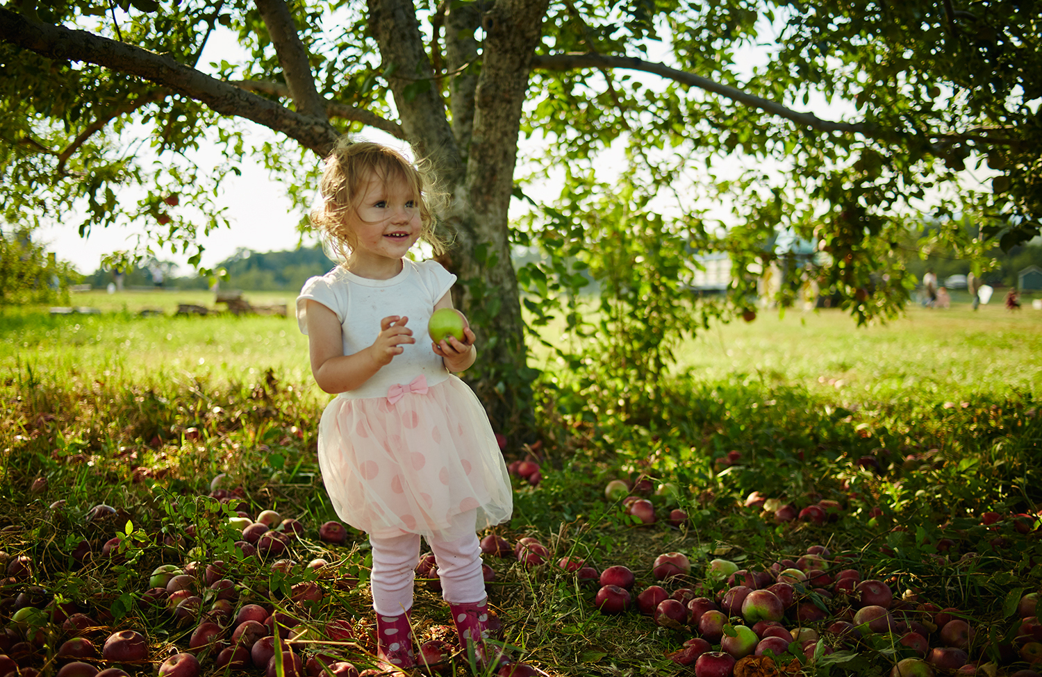 091915_Apple_Picking_OuthouseOrchards_556.jpg