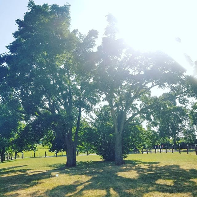 #sitevisit goes over beautifully 🌳🌞 love seeing visions come to life 👰 @agfoodmuseum #2019 #beelegantevents #wedding #eventplanner #weddingplanning