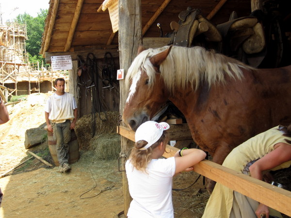 Female horse handler feeding the workhorse while a male horse handler and a child tourist look on.