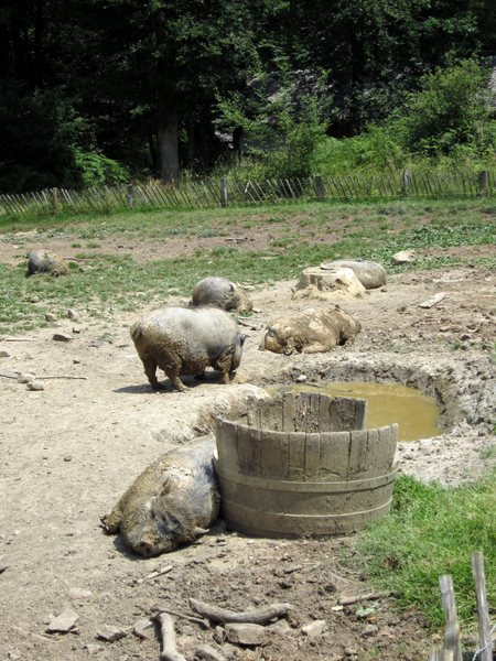 Pigs rolling in the mud behind the rope maker's shack.