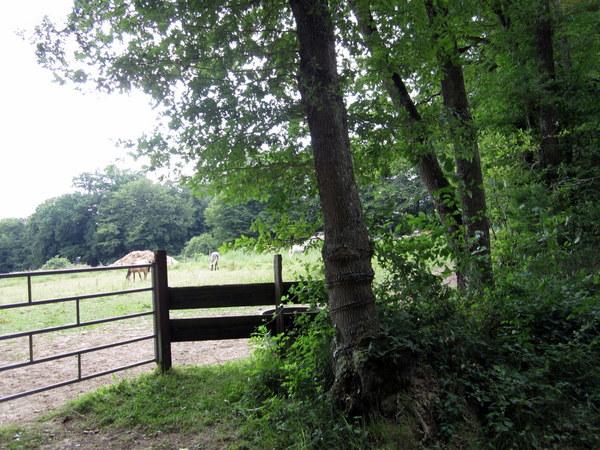 Horses grazing in a field. Saint Fargeau.
