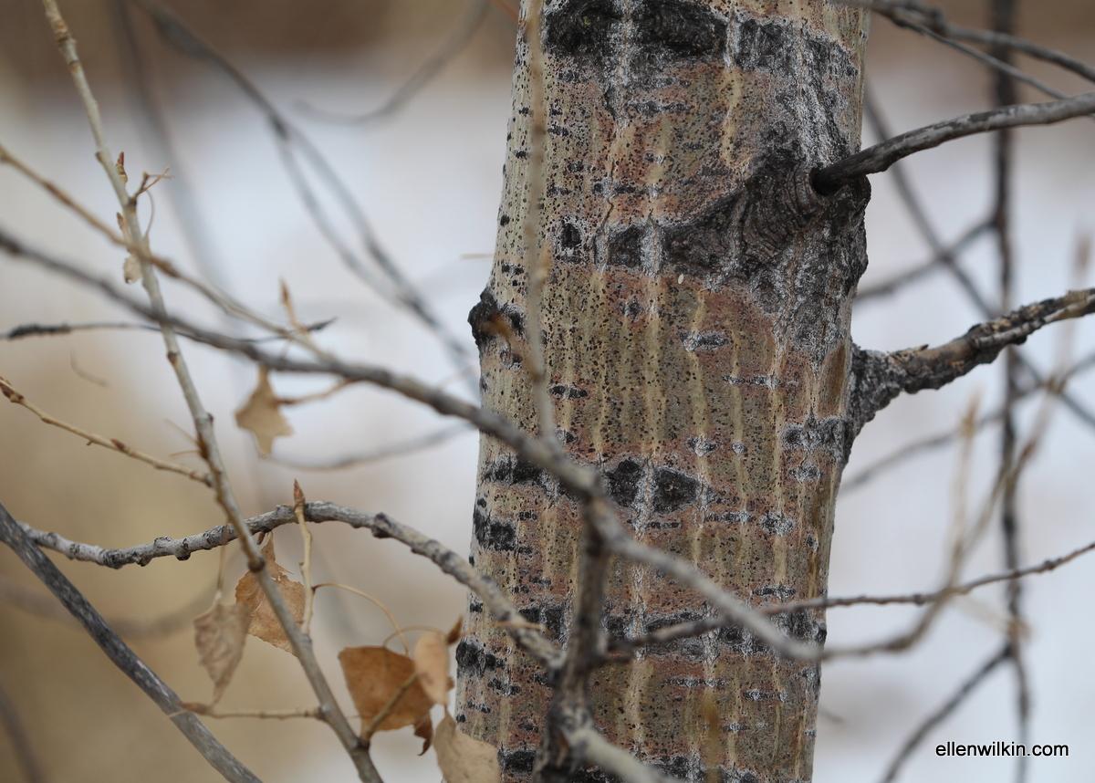 Lined Tree Bark Along Dry Creek