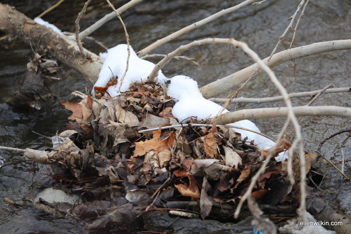 Capturing Debris, a Fallen Branch Along Dry Creek
