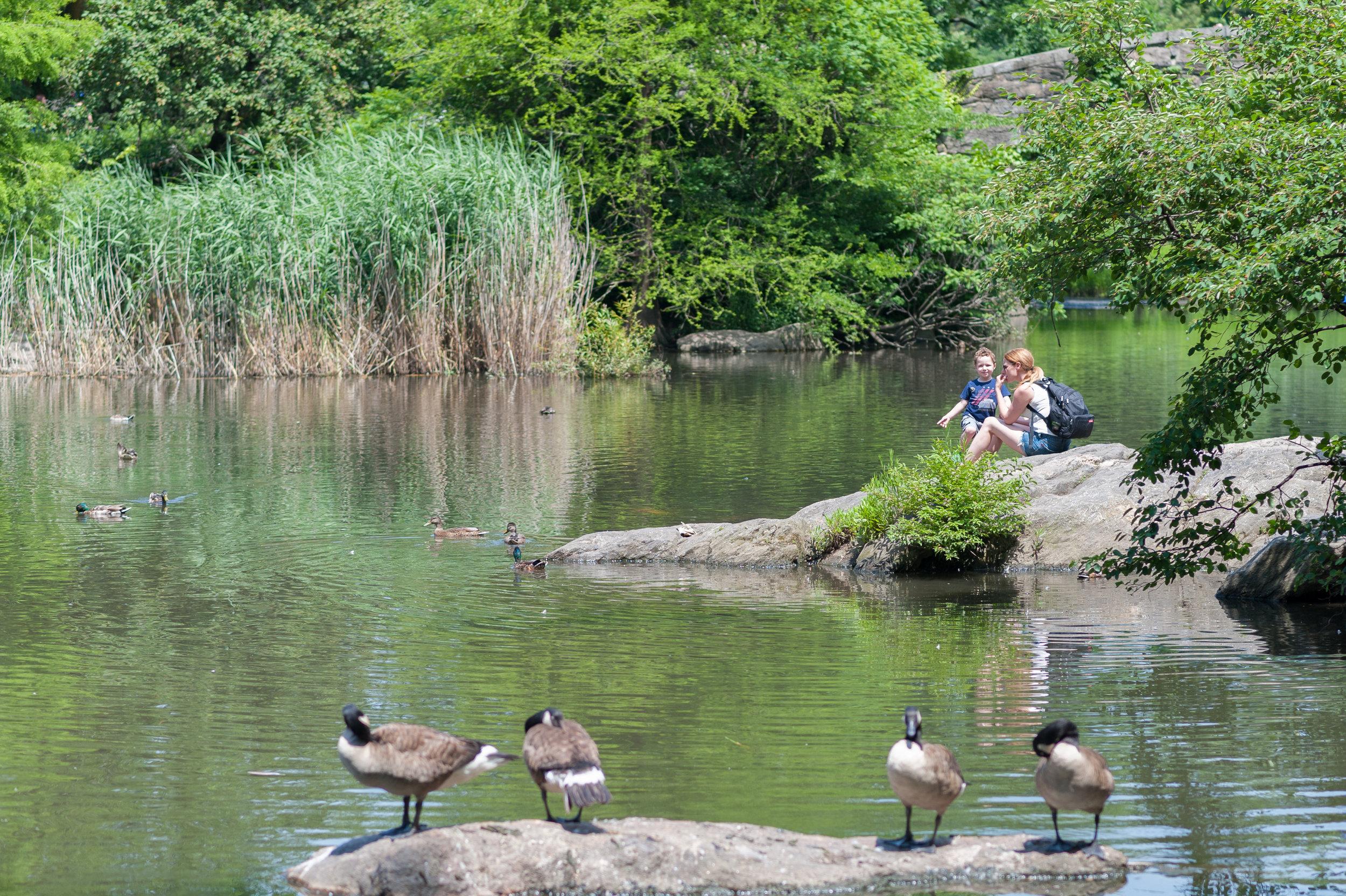 Deb+Noah Central Park June 2017-41.jpg